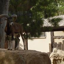Зоопарк в Лимассоле