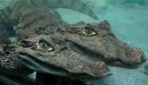 Ялтинский Крокодиляриум