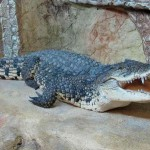 Фотогалерея «Ялтинский Крокодиляриум»