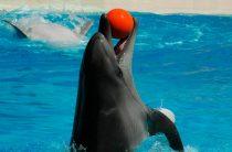 Театр морских животных «Акватория» в Ялте